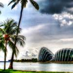 """Garden By the Bay w Coconut Tree, Singapore"" by sghomedeco"