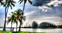Garden By the Bay w Coconut Tree, Singapore