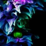 """""""Pearl"""" by judithschmidt"""