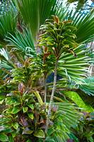 Tropical Greenery