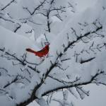 """C:\fakepath\winter 001"" by AmyNGood"