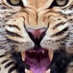 """Leopard"" by brianraggatt"