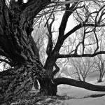 """Sleepy Hollow"" by iocchelli"