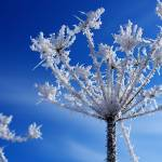 """""""Winter Jewels #1"""" by iocchelli"""