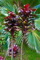 Tropical Reds and Greens
