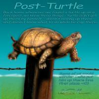 Post Turtle Art Prints & Posters by Chas Sinklier