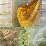 """""""White Summer Woodland"""" by CoraNiele"""