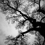 """""""Winter Tree II"""" by BethWold"""