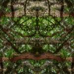 """""""Abstract Ambidextrous Trees, #2, Edit D"""" by nawfalnur"""