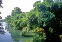 The Great Io River, Paradise of the Bambu   STom01