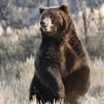 """Smiling Bear"" by wildlifegiftstore"