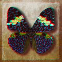 3D Anaglyph-Blue Cracker Butterfly