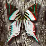 """3D Anaglyph- Giant Swordtail Butterfly"" by vincent-field_photography"