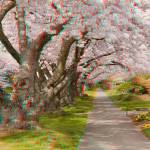 """3D Anaglyph-Cherry Lane"" by vincent-field_photography"