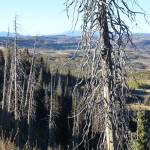 """Gnarled Pine Overlook"" by BrianAShaw"