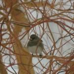 """Little Bird"" by vpicks"