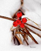 P13-09RA Bog Berries Winter