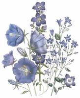Campanula Flowers by Jane Webb Loudon