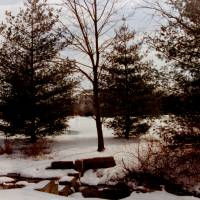 Wintergreen Art Prints & Posters by Sue Dreyer Kaftanuk