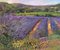 Buddleia and Lavender Field, Montclus, 1993