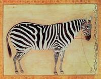 Zebra, from the Minto Album, Mughal, 1621,