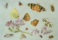 Butterflies, moths and other insects with a sprig