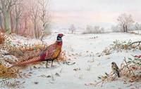 Pheasant and bramblefinch in the snow