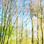 """Tree Reflections Abstract"" by NatalieKinnear"