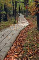 Boardwalk in Fall