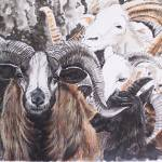 """Ram Patterns"" by cahbrewster"