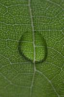 abstract leaf with drop