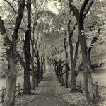 """Tree Lined Lane"" by jacquelineevans"