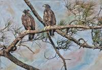Eaglets in Oil