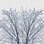 """""""Icestorm. (0002J)"""" by Fotofrieze"""