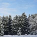 """Winter Pines. (0103)"" by Fotofrieze"