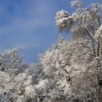 """""""Snow in Sun (0120)"""" by Fotofrieze"""