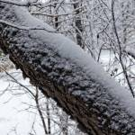 """""""Tree in Winter (8460)"""" by Fotofrieze"""
