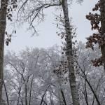 """""""Four Pillars of Frozen Oak (8259)"""" by Fotofrieze"""