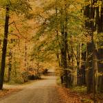 """Autumn Country Road"" by DBenoit"