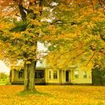 """Autumn In Franklin"" by DBenoit"
