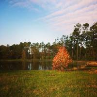 Fall at Camp Lantern Creek
