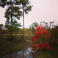 Fall Colors at Camp Lantern Creek