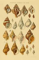 Vintage Snail Shell Drawings