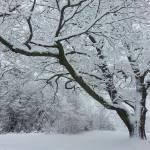"""Winters"