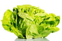Fresh, green lettuce over white background.
