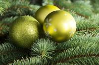 Christmas balls handing on a green tree.