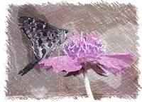 The Butterfly Visitor in Pink