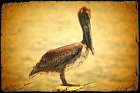 Charming Brown Pelican with Old World Framing