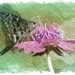 """""""The Butterfly Visitor - Green and Pink"""" by Groecar"""