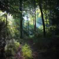 Summer Woodland Light Art Prints & Posters by Ceri Jones